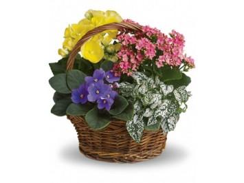 Cserepes virágok kosárban
