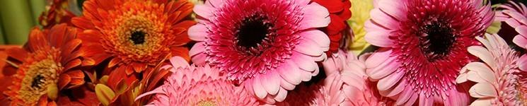 Virágkosarak, virágtálak